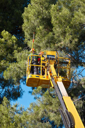 Tree work, pruning operations. Crane and pine wood forest. Vertical Stock Photo