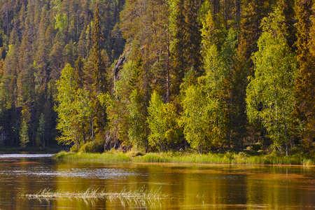 夕暮れ時フィンランド森林。ビヨンをトレイルします。自然の背景。水平方向 写真素材