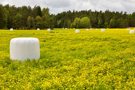 Packed silage on the countryside. Green and yellow landscape. Horizontal Stock Photo