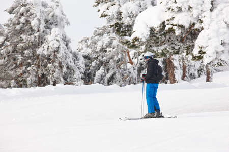 Skiing on a beautiful snow forest landscape. Winter sport. Horizontal Stock Photo