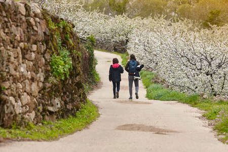 Cherry blossom pathway in Jerte Valley, Caceres. Spring in Spain Foto de archivo - 102339004