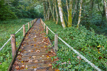 Wooden path in the forest. Muniellos natural park. Asturias, Spain