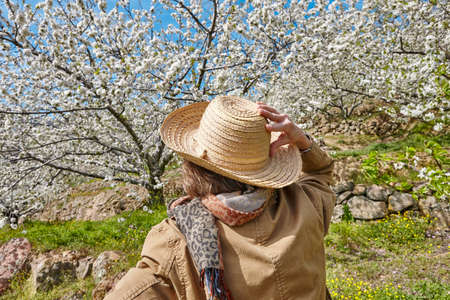 Woman looking up cherry blossom in Jerte Valley, Caceres. Spain. Seasonal