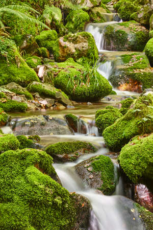 Green forest with stream in Muniellos biosphere reserve, Asturias. Spain