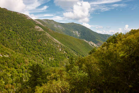 Oak tree forest mountain landscape in Asturias. Muniellos natural park. Spain Stock Photo