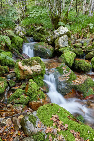 Water stream with mossy rocks in Muniellos Biosphere Reserve. Asturias