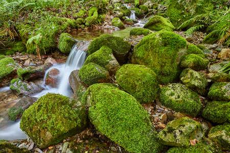 Water stream with mossy rocks in Muniellos Biosphere Reserve. Asturias 写真素材 - 121209709