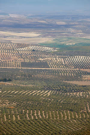Olive tree fields in Andalusia. Spanish agricultural harvest landscape. Jaen Stock Photo