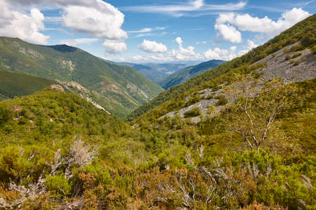 Oak tree forest landscape in Asturias. Muniellos natural park. Spain