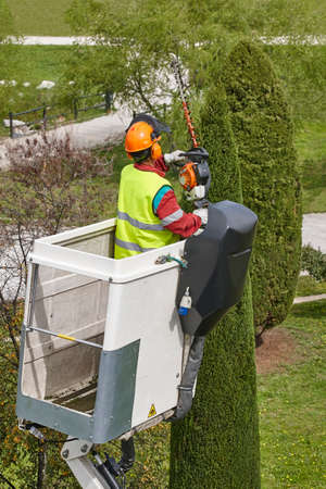 Equipped worker pruning a cypress tree on a crane. Gardening works