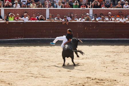 Fighting bull charging a man in the arena. Bullring. Spain Stock Photo