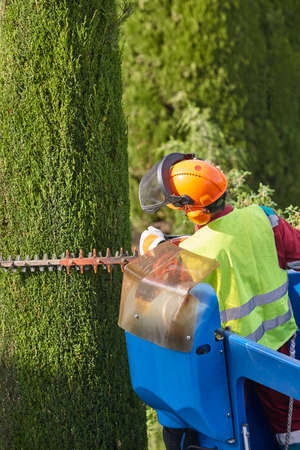 Gardener pruning a cypress tree with a chainsaw and a crane