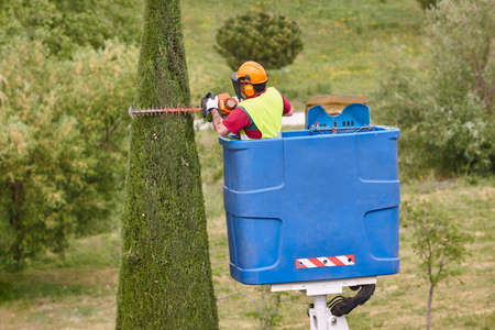 Gardener pruning a cypress tree with a chainsaw on a crane
