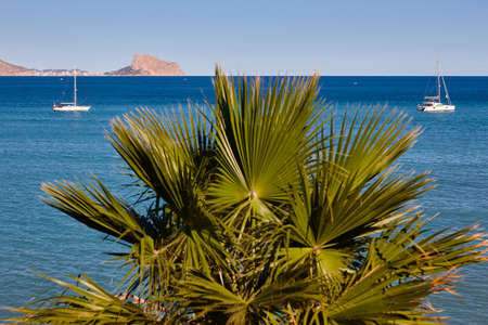 Mediteranean coastline with palm tree, yachtes and blue sea. Spain