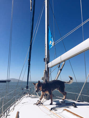 sf: Sailing the SF Bay with a water dog Stock Photo