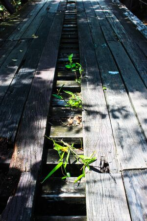 Wood bridge with Green weeds. photo
