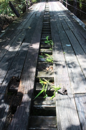 Wood bridge with Green weeds. photo