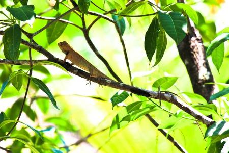 Lizard on tree photo