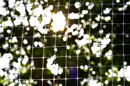 Silhouette bird netting. photo