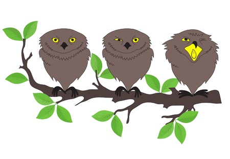 Illustration of owls sitting on a tree branch  Vector