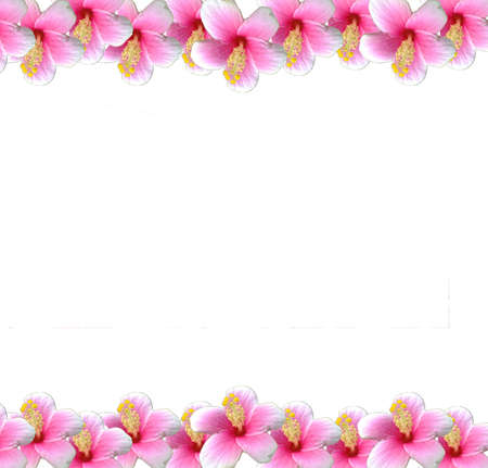 Pink flower frame photo