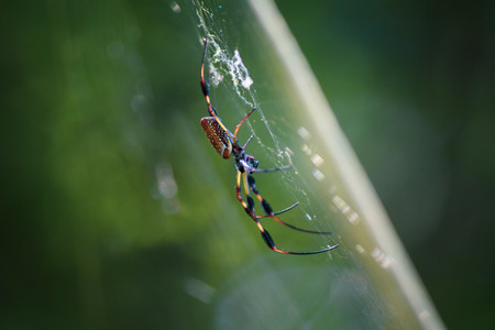 Spider climbing and weaving a web Stock Photo
