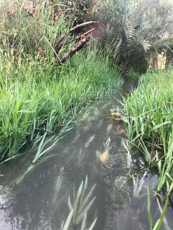 Watercourse is surrounded by grass used for watering Farm 免版税图像