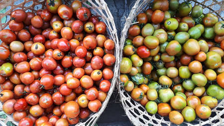 Red and green tomatoes tomato pile inside rattan basket fresh from farm Фото со стока - 134258878