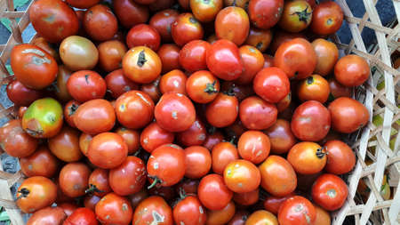 Tomato pile red tomatoes vegetable farm fresh inside rattan basket