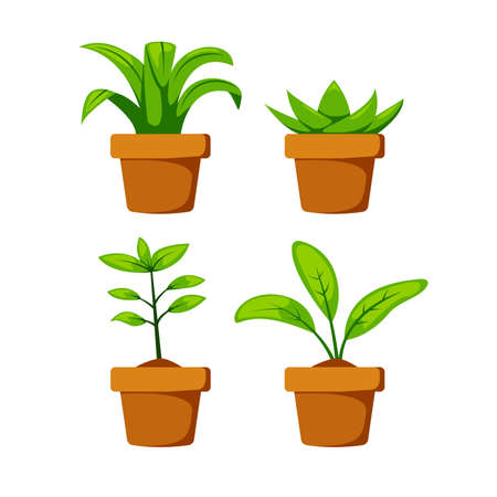 Set home or indoor plant on pot vector object element decoration for illustration project