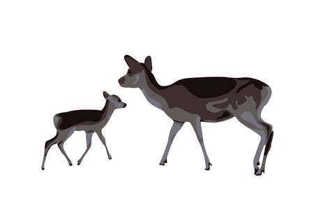 Mommy deer and baby deer looking for food and then meet each other under the tree Kancil Rusa Kijang