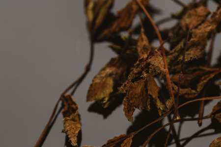 dried mint leaves spice on a dark background.