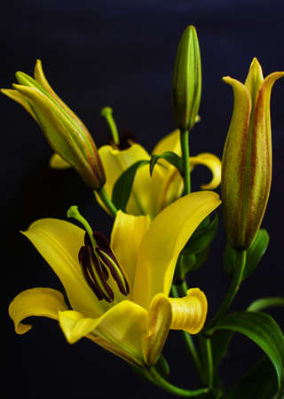 Yellow lily flowers with selective focus photo
