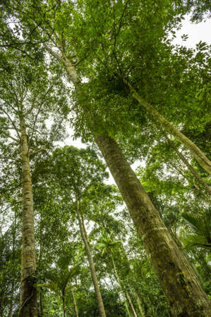 Natural rain forest trees photo