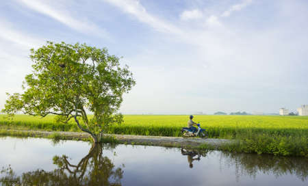 A tree at paddy field with nice blue sky background photo