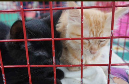 Kittens in a cage Banque d'images