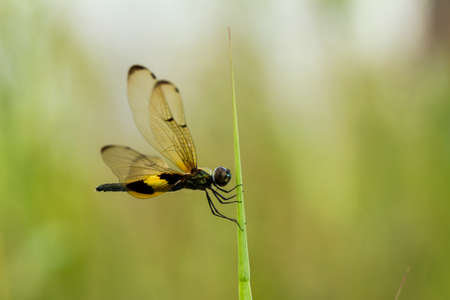 Dragonflies are beautiful animals,but they are also fierce predators. Dragonflies can fly in all directions, including sideways and backwards,even flying still at one point for more than a few minutes