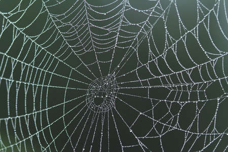 The spider is a very extraordinary animal, it builds its nest as well as a trap to catch its prey from the threads that are released from the inside of its body.