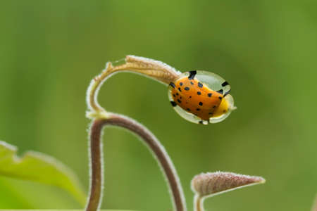 Bug and Beetle types are so numerous they are so small and beautiful, being on the foliage and flowers makes it look really attractive, it's quite difficult to photograph this breed. Imagens
