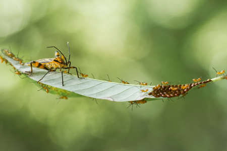 Insects are small animals that are very useful in addition to adding to the splendor of the environment, they also function to help pollinate plants, there are many types of insects that are beautiful