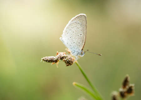 beautiful white butterfly on the grass buds Banque d'images