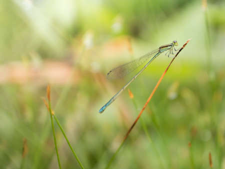 cute dragonfly hang on the grass with bokeh background