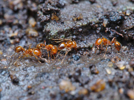 the fire ant colony is working