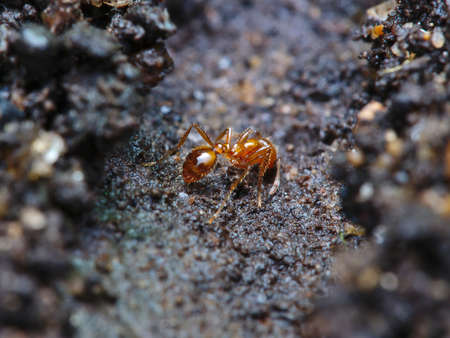 a fire ant is working build the nest Stock Photo