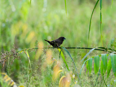 a sparrow perched on the grass