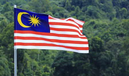 マレーシアの国旗、Jalur Gemilang マレーシア熱帯雨林の木の背景に手を振っています。