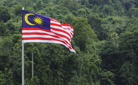 1malaysia: Malaysia Flag, Jalur Gemilang waving with the background of Malaysian rainforest trees. Stock Photo
