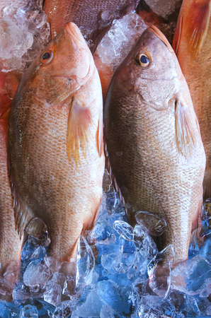 Fresh Snapper or Mangrove Jack fish on display at market. Stock Photo