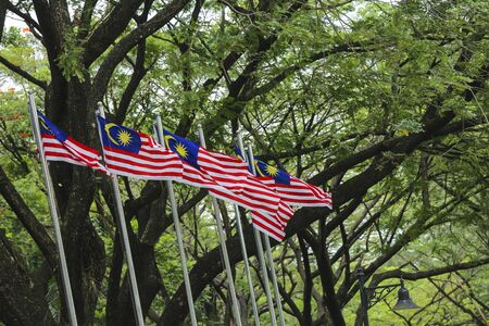 1malaysia: Malaysia Flag also known as Jalur Gemilang waving with the background of Malaysian rainforest trees. In conjunction of Independence Day celebration or Merdeka Day.