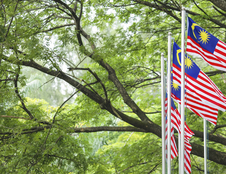 conjunction: Malaysia Flag also known as Jalur Gemilang waving with the background of Malaysian rainforest trees. In conjunction of Independence Day celebration or Merdeka Day.